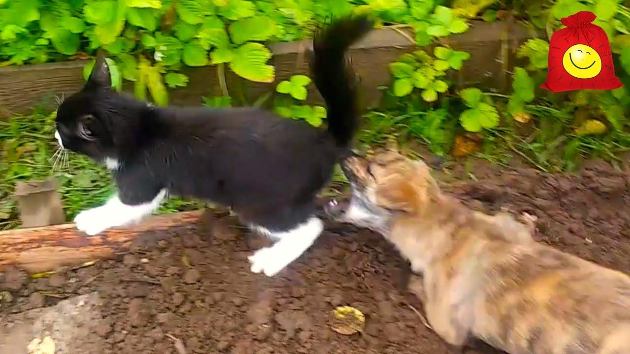 Щенок напал на котёнка. Забавные животные
