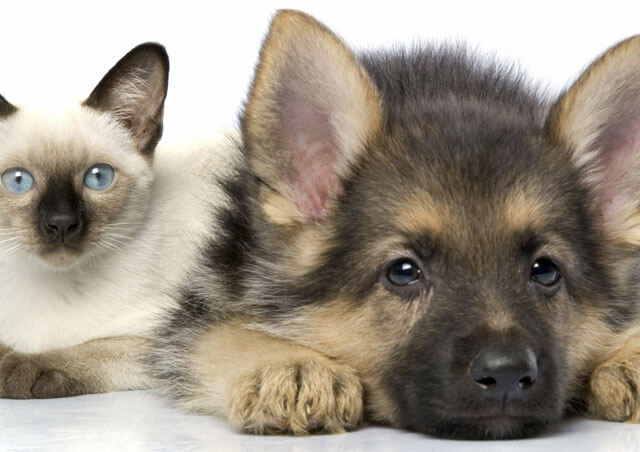 Стерилизация и кастрация домашних животных