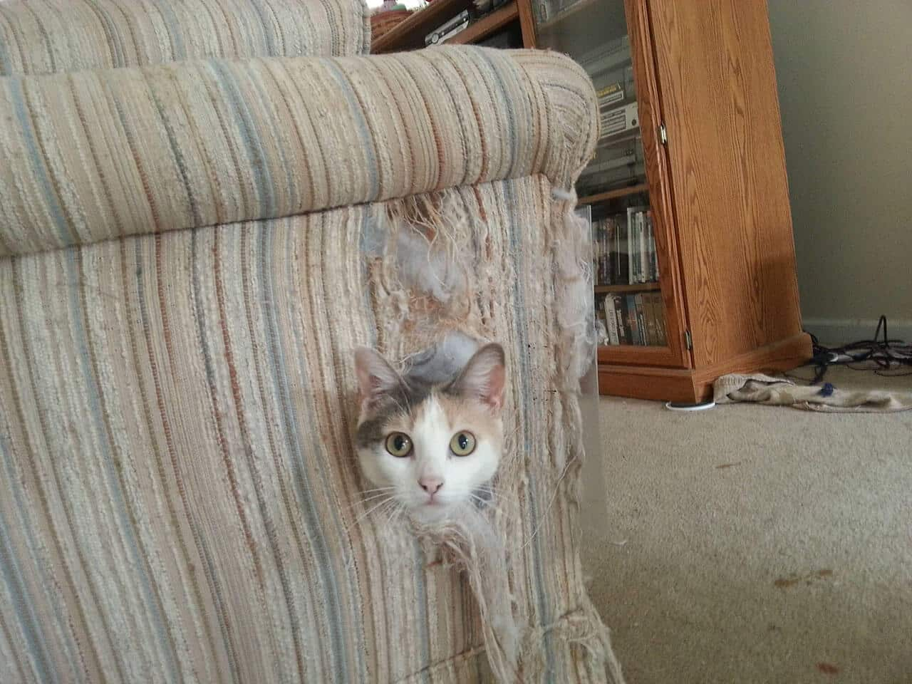 Как отучить кошку драть мебель