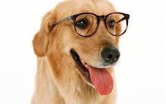 Если собака ослепла