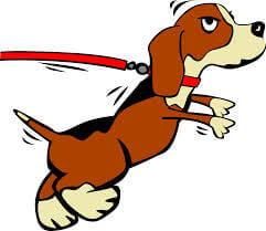 Если собака тянет поводок...