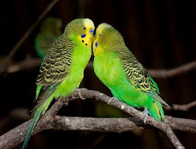 У попугая клещ