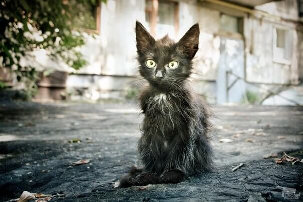 Кошка с улицы