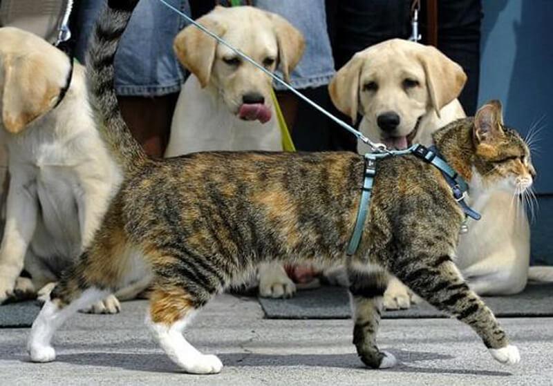 Кошка должна гулять