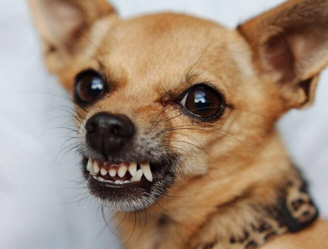Почему собака кусается
