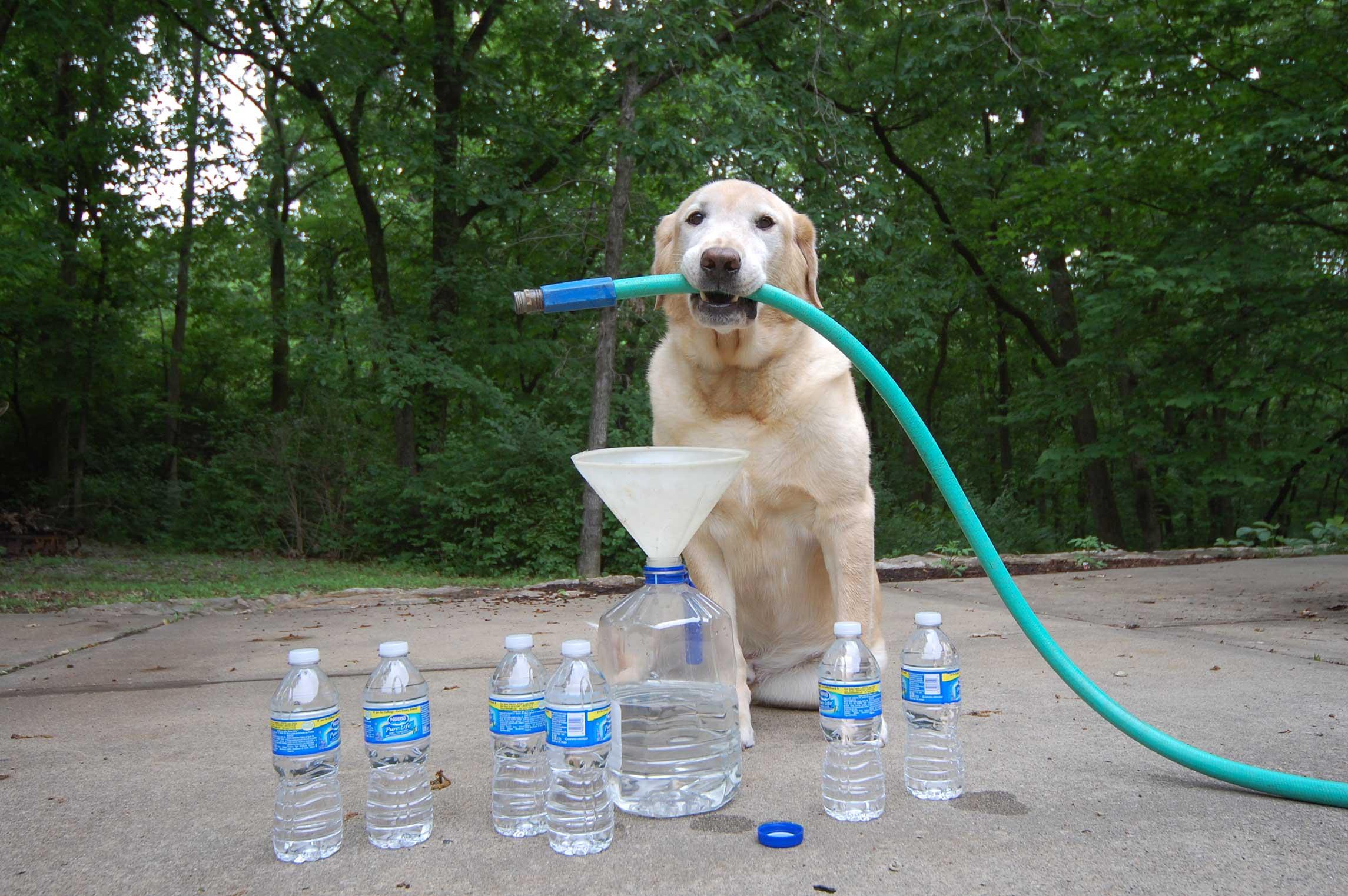 сколько воды должна пить собака