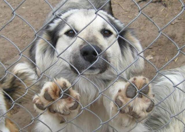 собака из приюта. плюсы и минусы