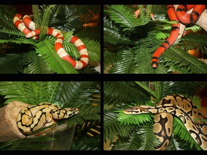 Как ухаживать за змеей в домашних условиях