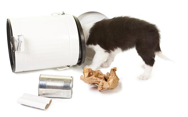 Собака подбирает мусор