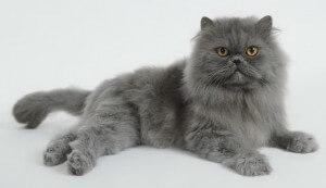Продолжительность жизни домашних кошек