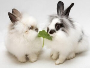 уход за декоративными кроликами