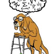 Сколько лет собаке по человеческим годам