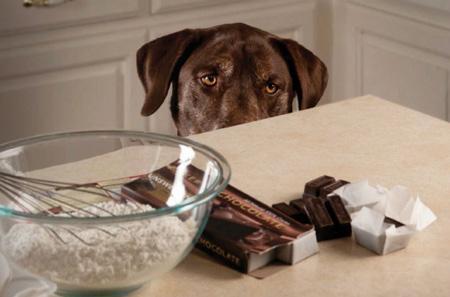 Какие продукты вредны для собак