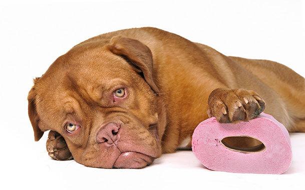 Понос у собаки: причины и лечение