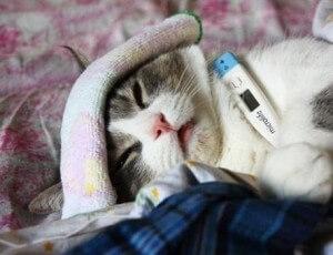 Аллергии у животных