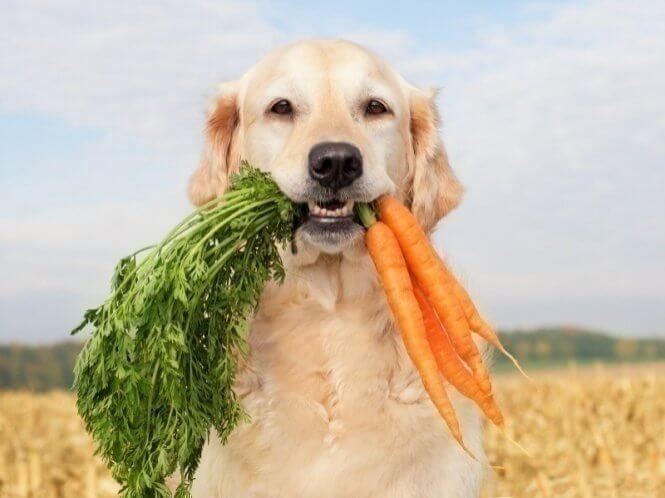 Собака постоянно облизывается