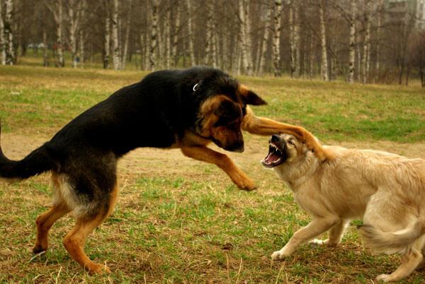Собаку укусила собака