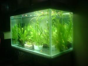 aquarium-1188225-640x480