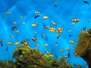 aquarium-cape-town-4-1328931-640x480