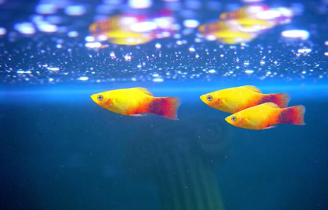 Как выбрать рыбок