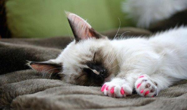 Колпачки на когти кошкам