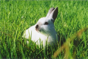 miff-the-rabbit-in-the-sun-1457970-639x427