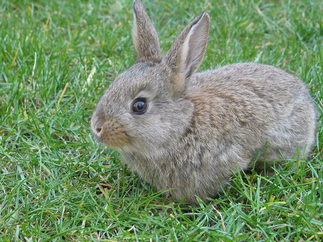 У кролика гноятся глаза