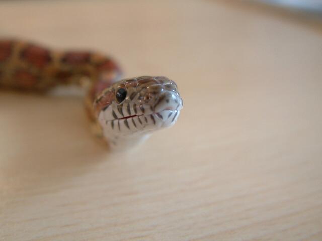 Как выбрать змею