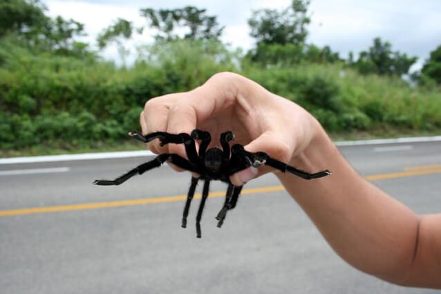 Как выбрать паука