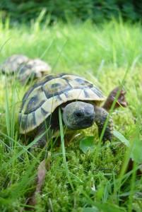 Как выбрать черепаху