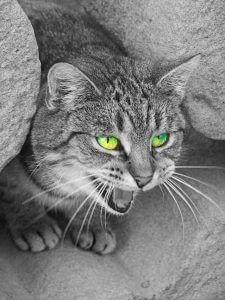 Кошка шипит на хозяина