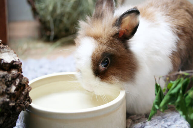 Чем кормить кролика
