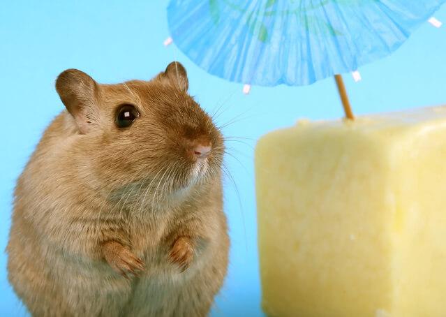 Чем кормить крысу