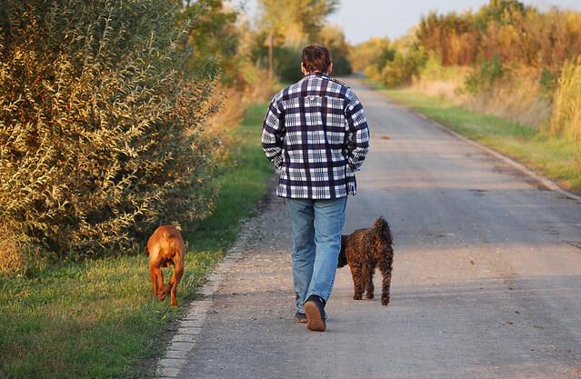 Где гулять с собакой