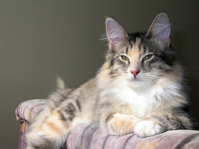 Определяем возраст кошки