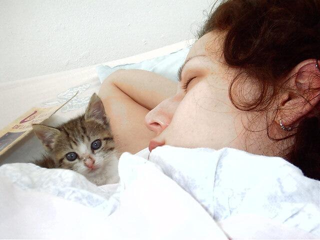 Почему кошки спят в ногах?