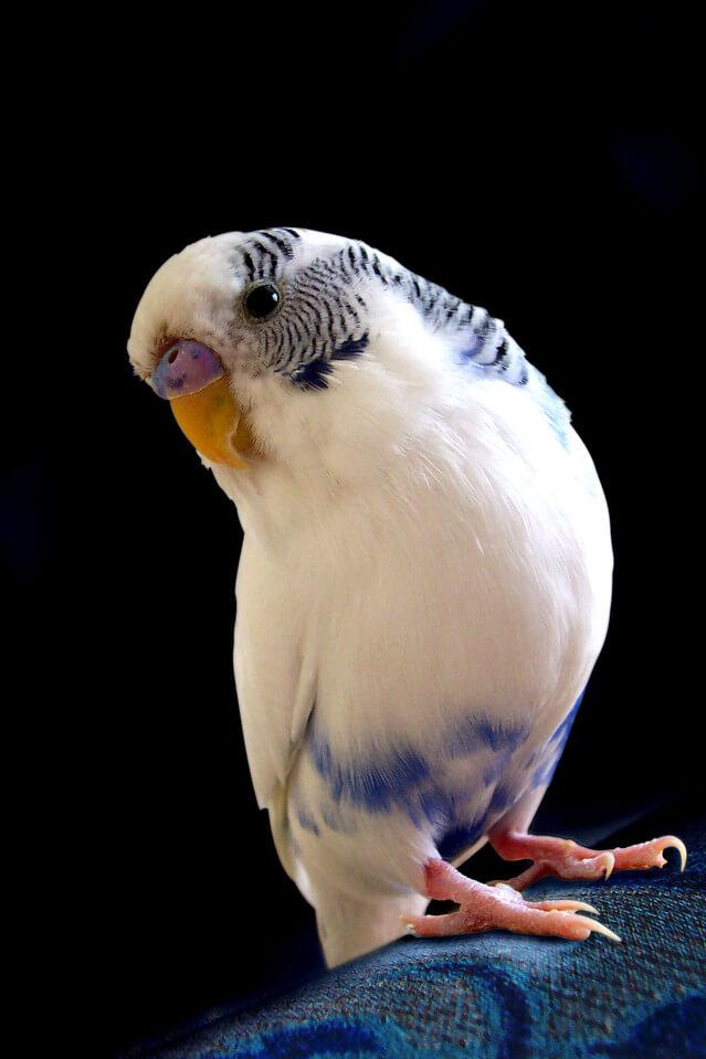 У попугая слоится клюв