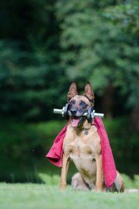 Как научить собаку выполнять команды