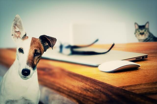 Почему собака называется собака