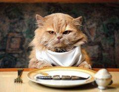 Что нельзя давать кошкам?
