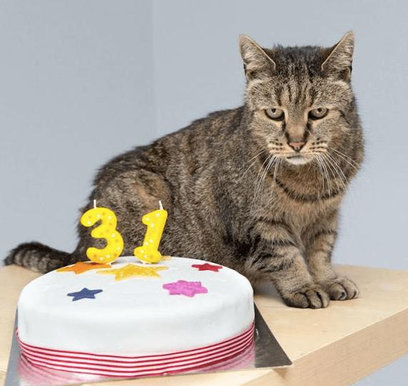 Самому старому коту в мире - 31 год!