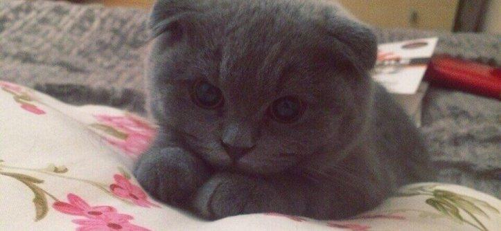 Как выбрать котенка для дома?