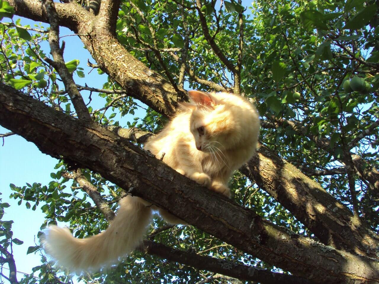 Почему кошки приземляются на лапы?