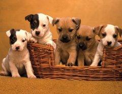 Как приучить щенка к корзинке