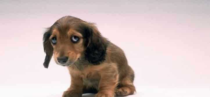 Можно ли брать собаку за шкирку