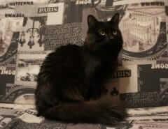 Почему кошка машет хвостом
