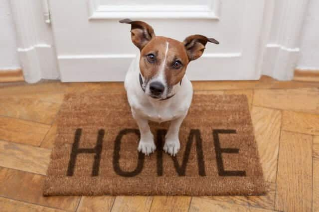 Собака кидается к входной двери