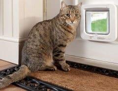 Чужие кошки лезут в дом