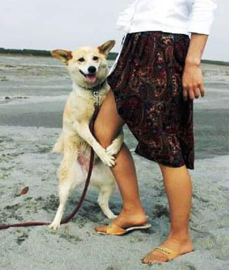 Собака пристает к ноге