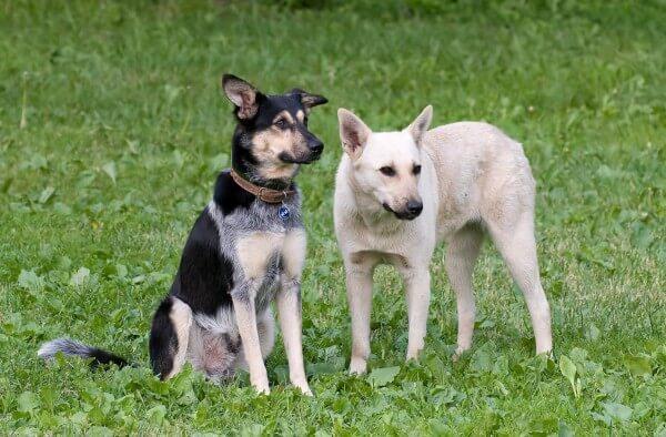 Собака не хочет общаться с другими собаками